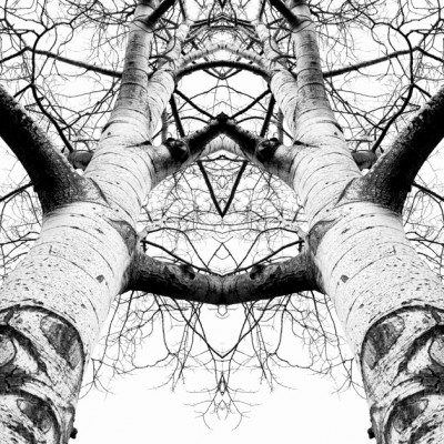 Aspen Cathedral - James K Papp - 11x14 photographic print on canvas